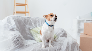 Photo of Off the leash and on the lease – the pros and cons of pets in rentals
